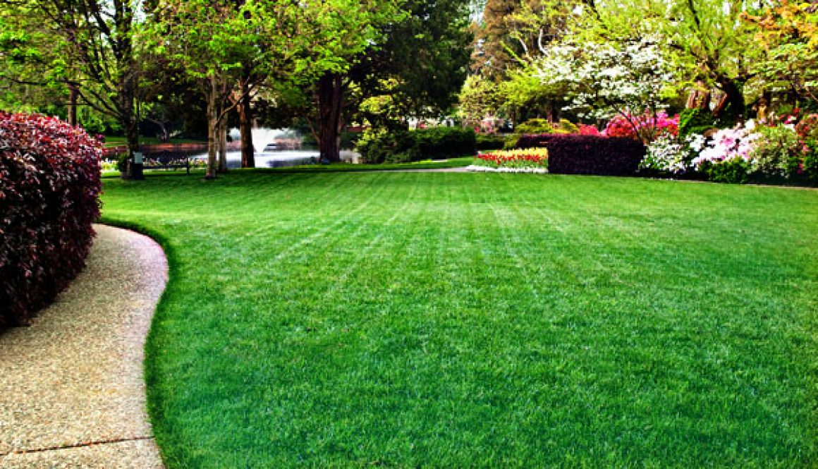 Lush-Green-Lawn