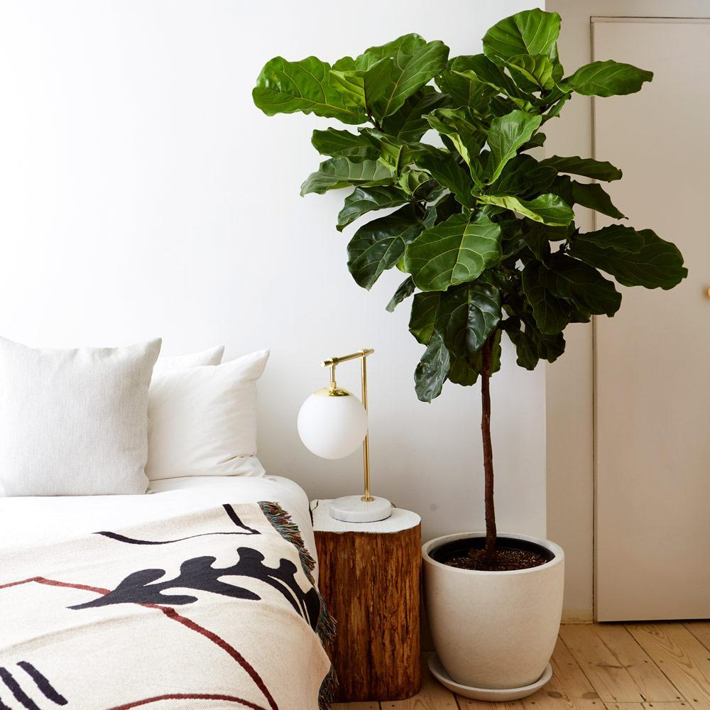 gallery_fiddle-leaf-bedroom_02b