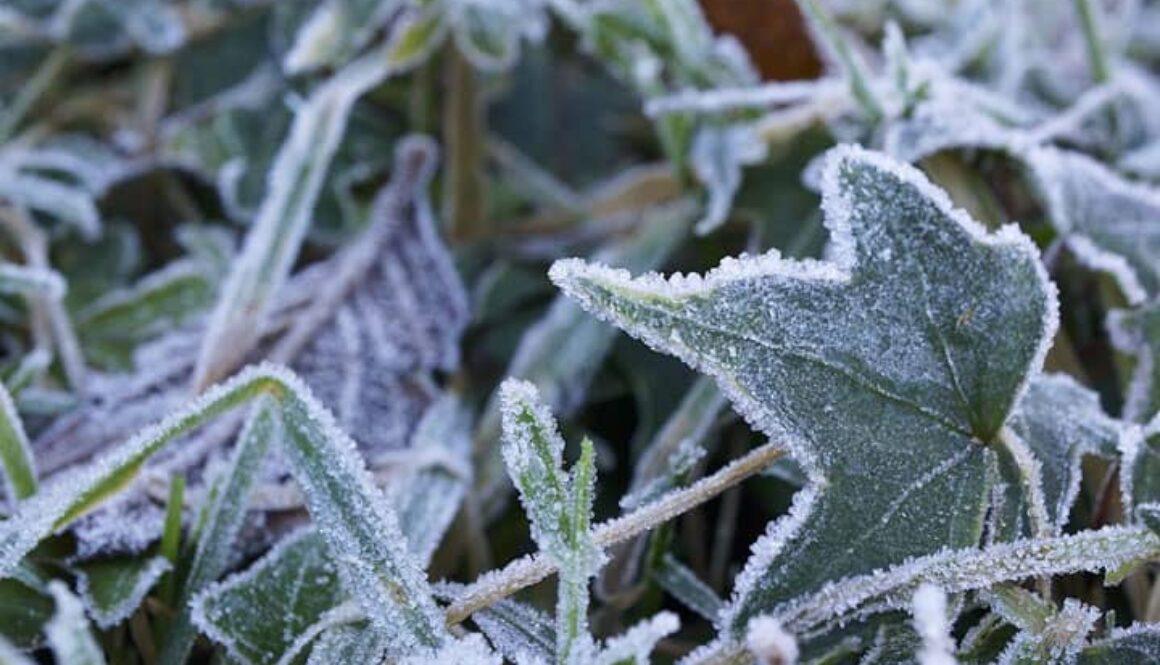 gardeningchannel-frost-garden